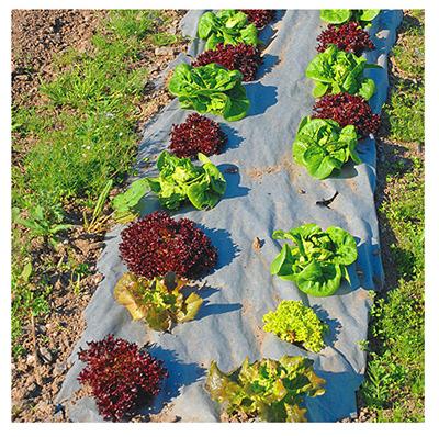 garden weed barrier natural garden weed barrier 3 x 40 ft nat340. Black Bedroom Furniture Sets. Home Design Ideas
