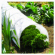 Garden Grow Tunnel, White Polythene, 18-In. x 10-Ft.
