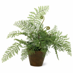 "15"" Aspidiaceae Fern, Must Purchase in Quantities of 4"