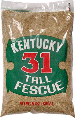 5LB Ky31 Grass Seed - Woods Hardware