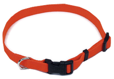 "1"" ADJ ORG Dog Collar"