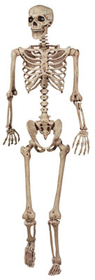 5 Pose N Stay Skeleton