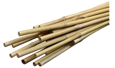MG 12PK 2' Bamboo Stake - Woods Hardware