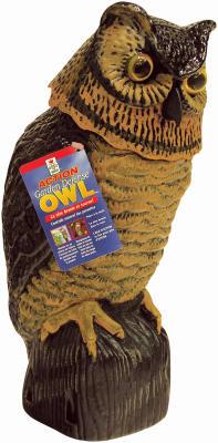 Bobble Head Owl
