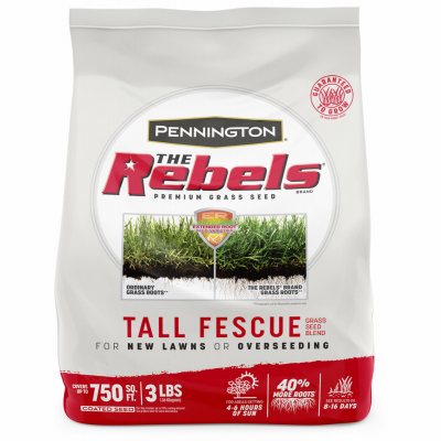 3LB Rebel Fescue Seed
