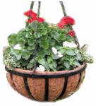 Border Concepts 72260 Wrought Iron Traditional Hanging Basket, 12-In.
