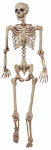 Seasons (Hk) 18965 Posable Skeleton, 5-Ft.