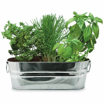 Buzzy 94330 Kitchen Herb Windowsill Grow Kit