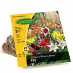 Van Bloem Gardens 431190 GT15CT 75 Day Lily Bulb