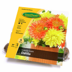 Van Bloem Gardens 433390 GT 5CTCand Dahlia Bulb
