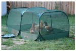 Wild Goose Farms The 5CHPP Portable Chicken Enclosure
