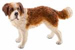 Schleich North America 16833 BRN/WHT St Bernard Dog