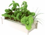 Hydrofarm GCSB Hydroponic Salad Box Kit