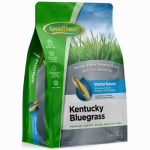 Dlf GREUN215 Premium Coated Kentucky Bluegrass Seed, 7-Lbs.