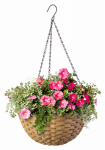 Panacea Products 82305 Resin Wicker Hanging Basket, 14-In.