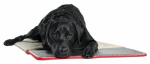 Q10 Products Dba Enchanted Home Pet CO2630-15 Self-Warming Pet Pad, 23 x 36-In.