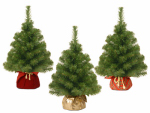 National Tree Co-Import NBA7-20G/B 2-Ft. Artificial Noble Spruce Tree